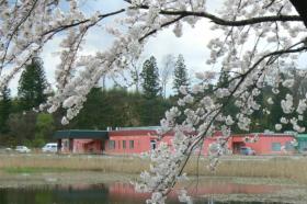 ほっとハウス_桜